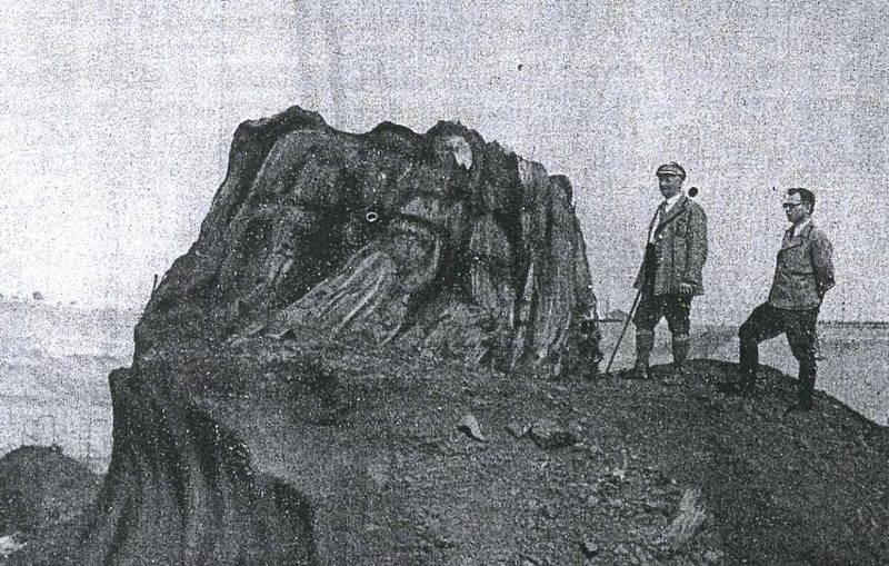 Verkieselter Baumstubben im Böhlener Oberflöz (Tagebau Böhlen,  Foto: K. Pietzsch 1936)